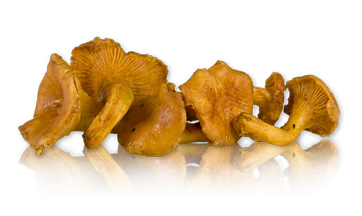 Shipping Refrigerated Items Fed Ex http://www.marxfoods.com/Frozen-Wild-Chanterelle-Mushrooms