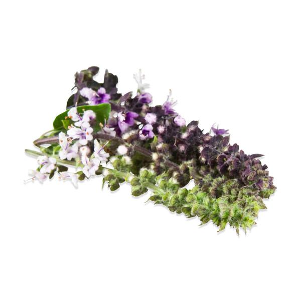 Fresh Basil Blossoms