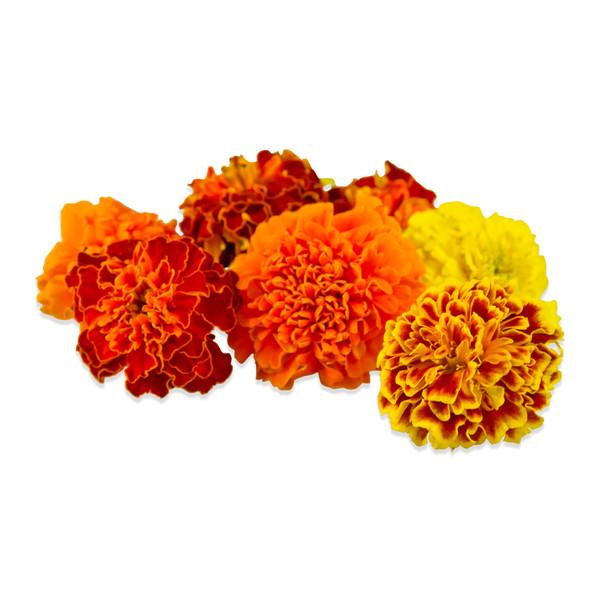 Fresh Marigolds-4