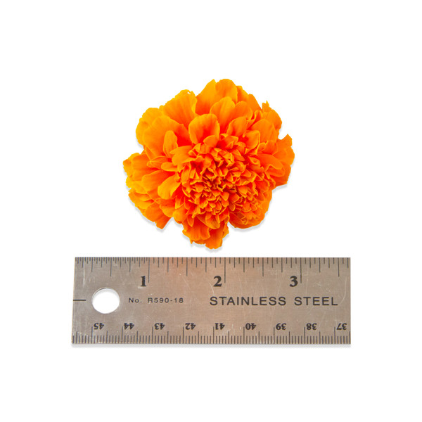 Fresh Marigolds-3