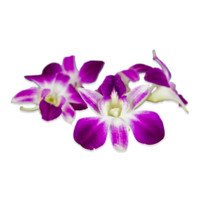 Fresh Karma Orchids-1