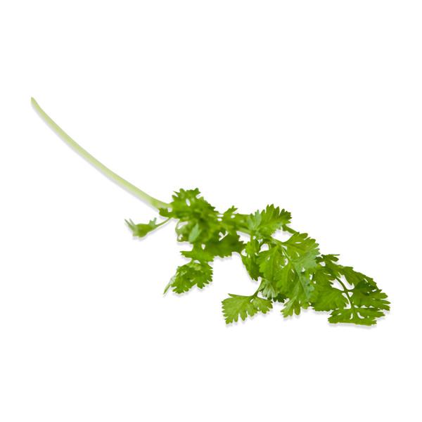 a sprig of fresh green chervil