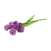 Fresh Chive Blossoms-1