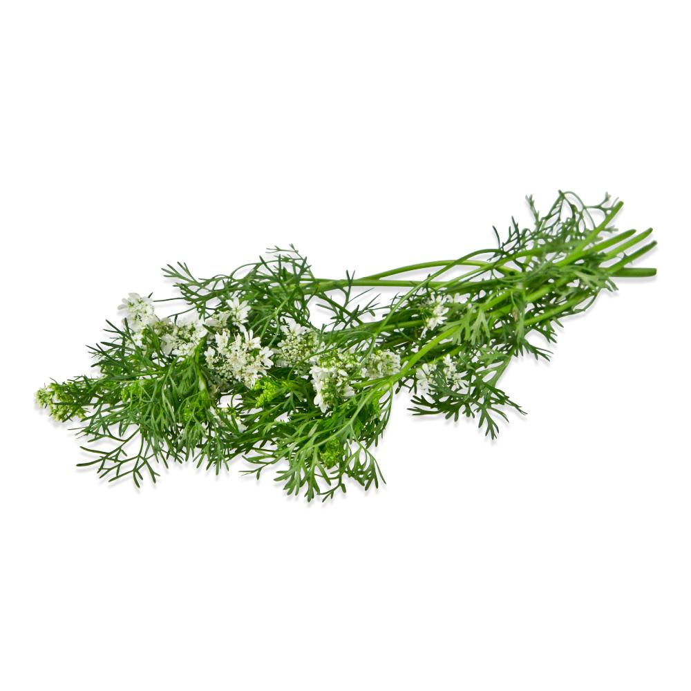 Fresh Cilantro Flowers-1