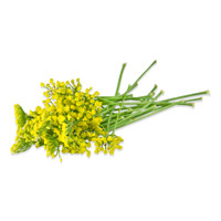 Fresh Fennel Flowers-3