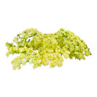 Fresh Elderflowers-3
