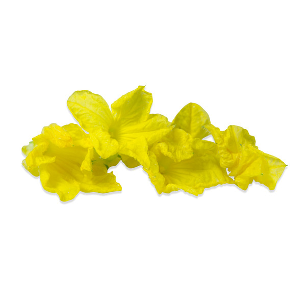Fresh Cucumber Flowers-1