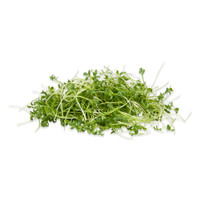 Curly Micro Pepper Cress