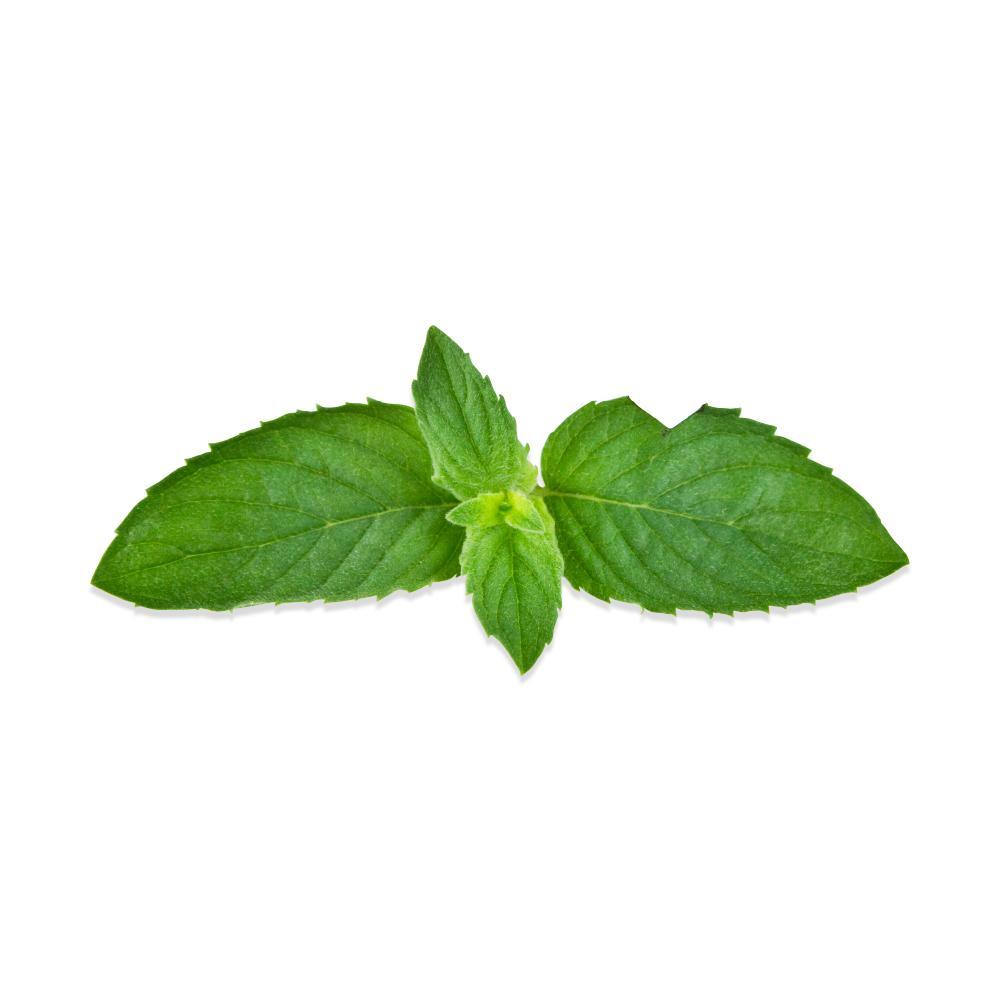 Delicata Mint Tops-2