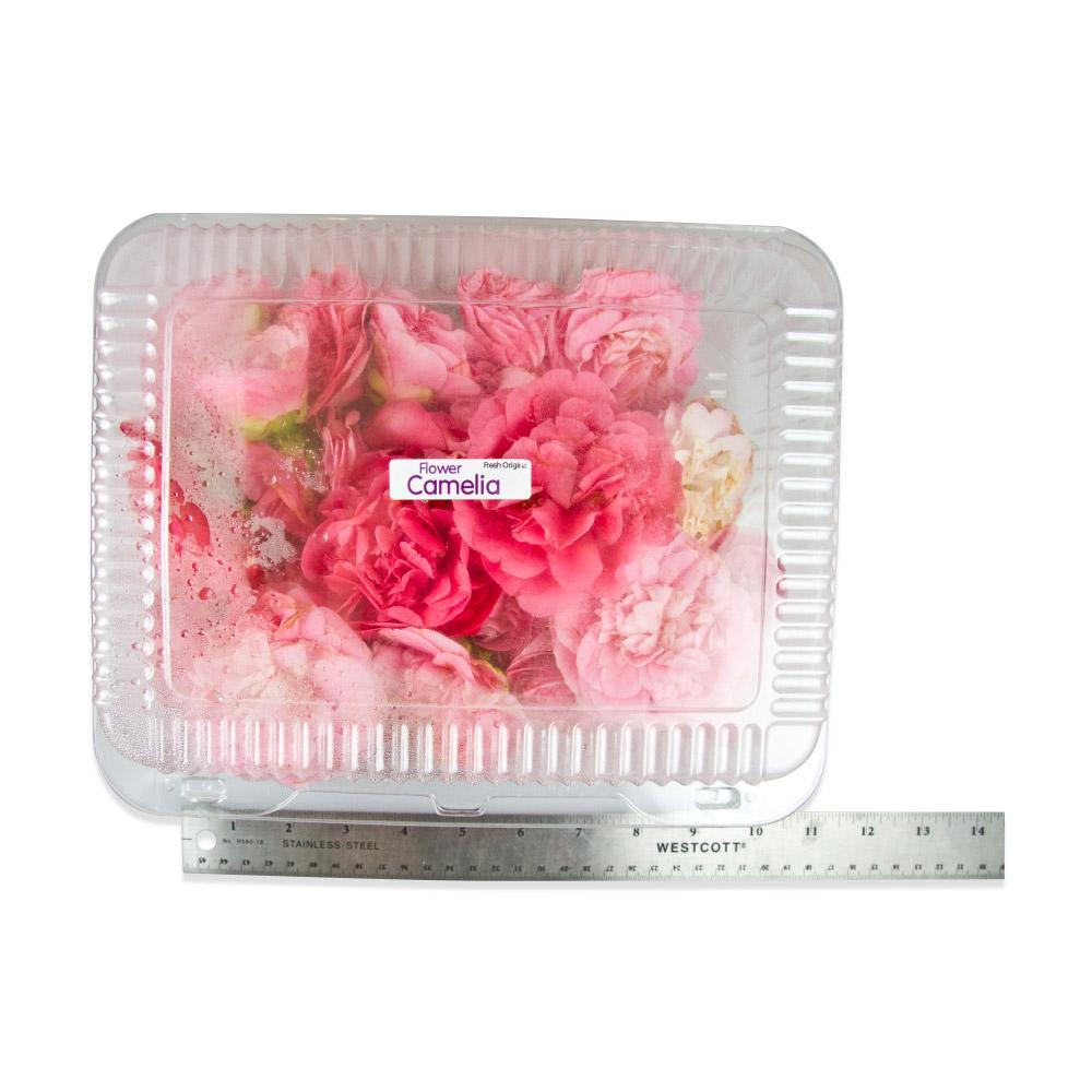 Fresh Camellias-2