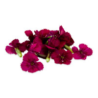 Fresh Micro Dianthus-1