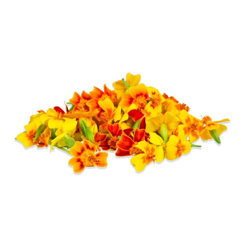 Fresh Micro Marigolds-1