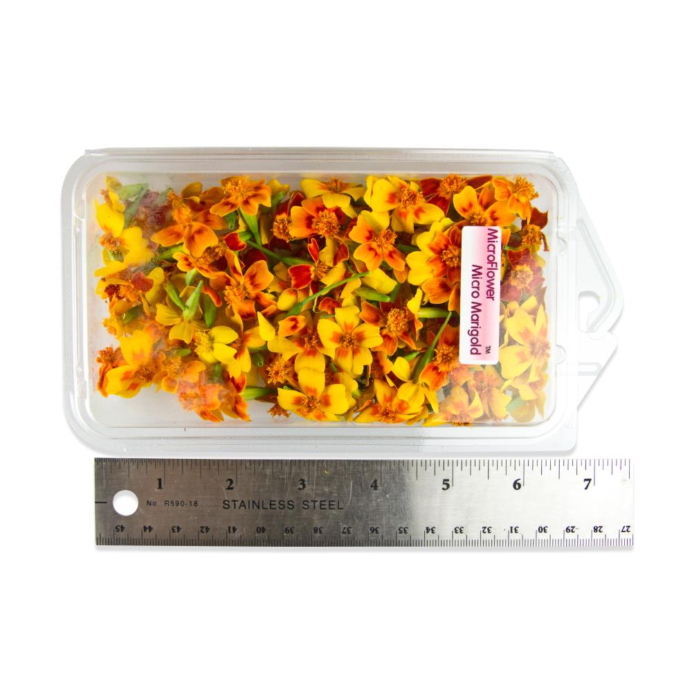 Fresh Micro Marigolds-2