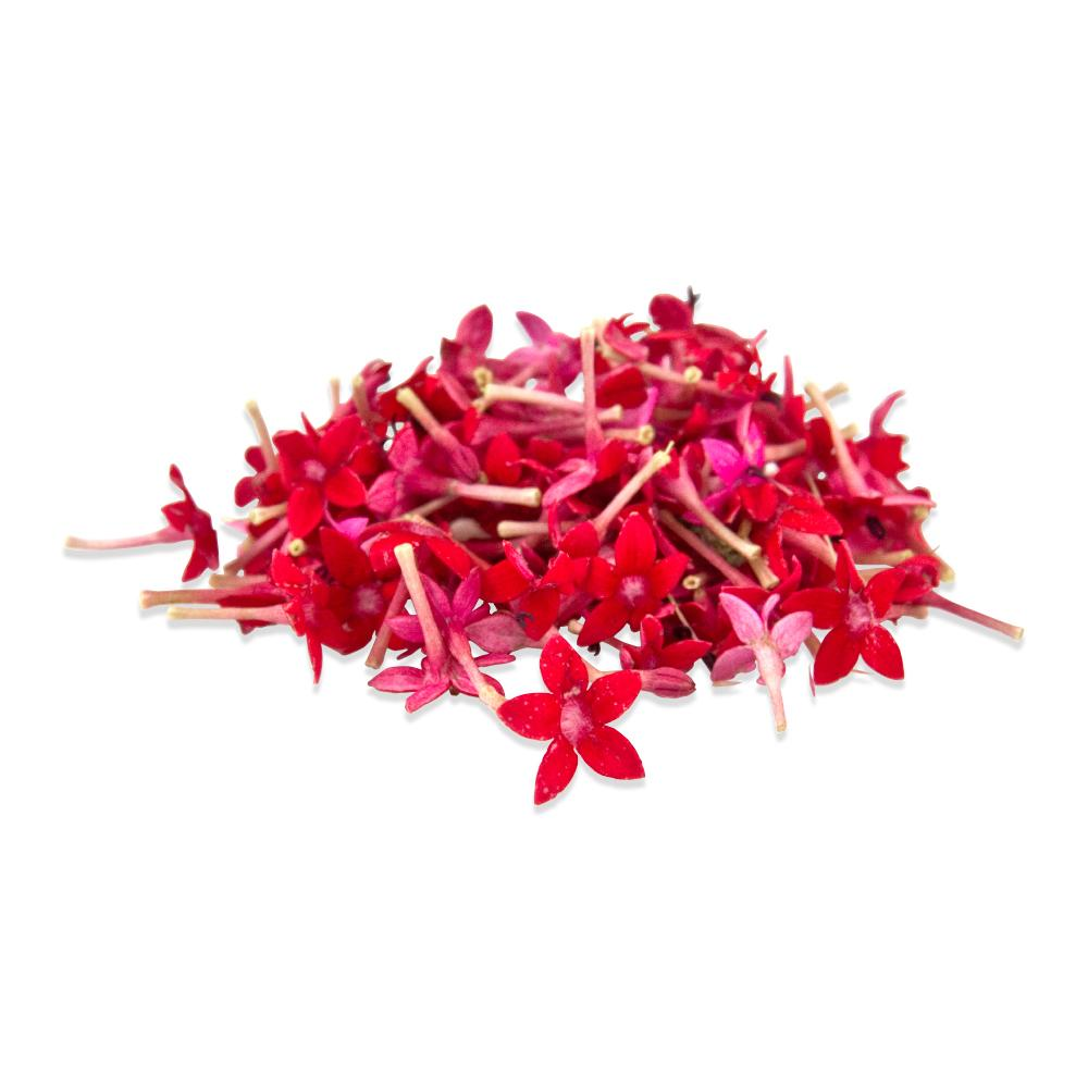 Buy edible starflowers in bulk marx foods fresh micro star flowers 1 mightylinksfo