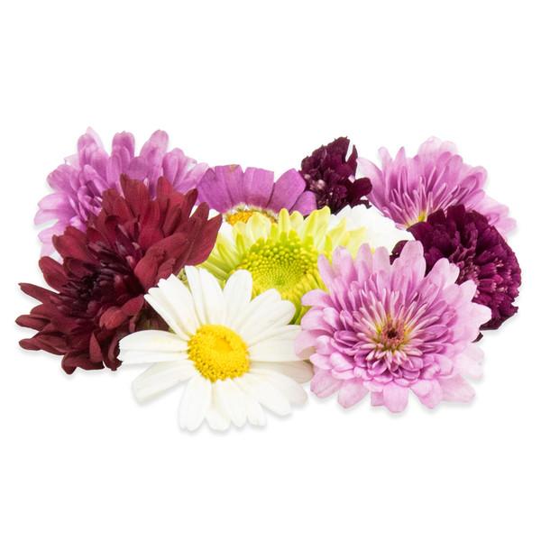 Fresh Mum Flowers-1