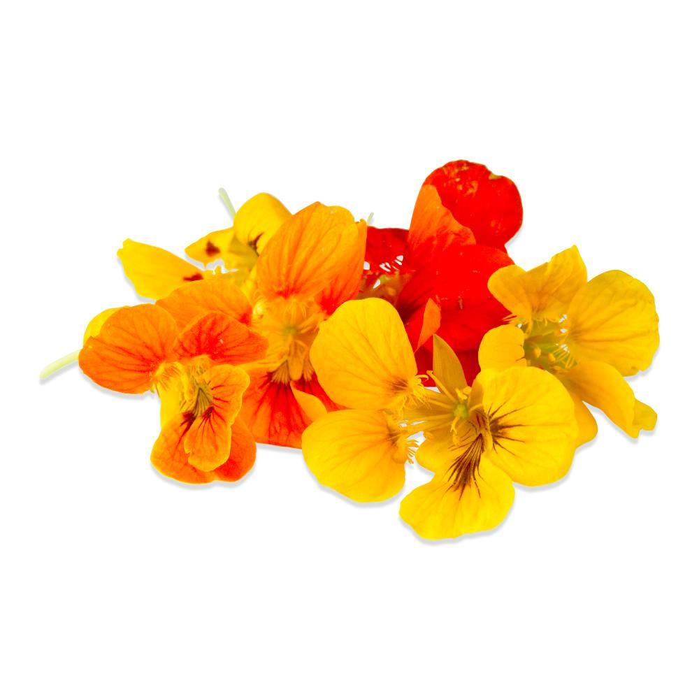 Fresh Nasturtium Flowers & Leaves-1