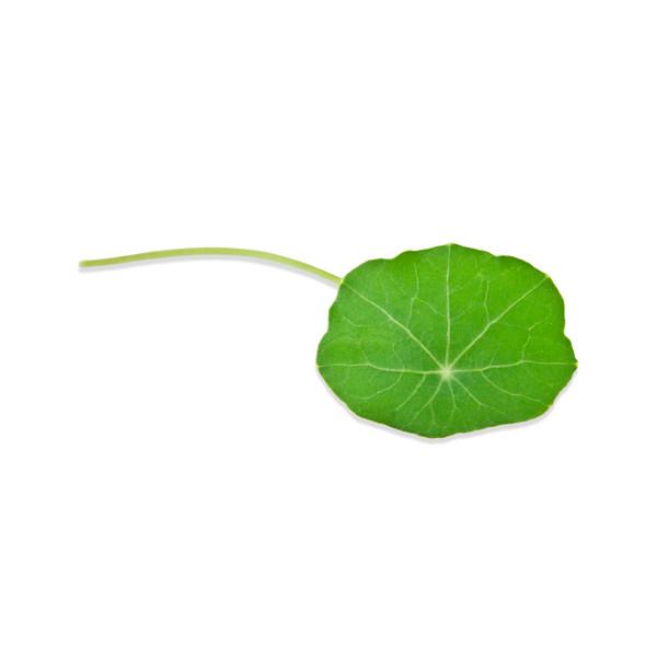 Fresh Nasturtium Flowers & Leaves-2