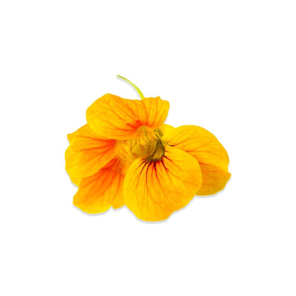 Fresh Nasturtium Flowers & Leaves-4