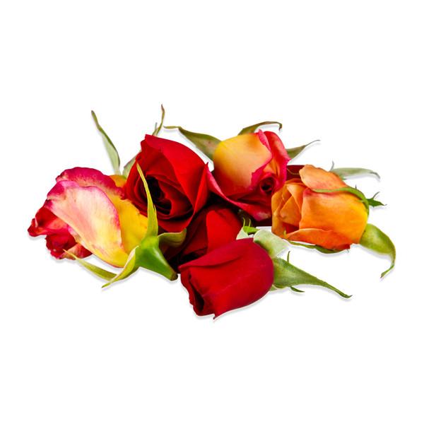 Fresh Whole Rose Blend-4