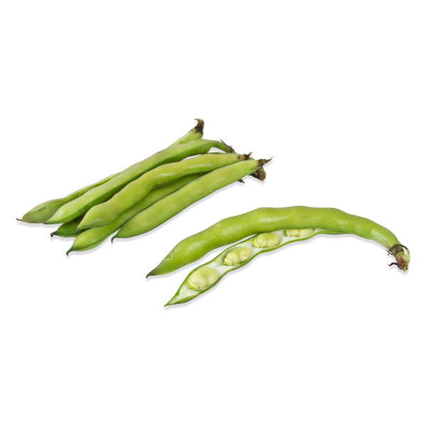 Fresh fava bean pod with ruler