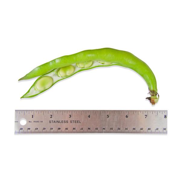 Fresh fava beans in their pods