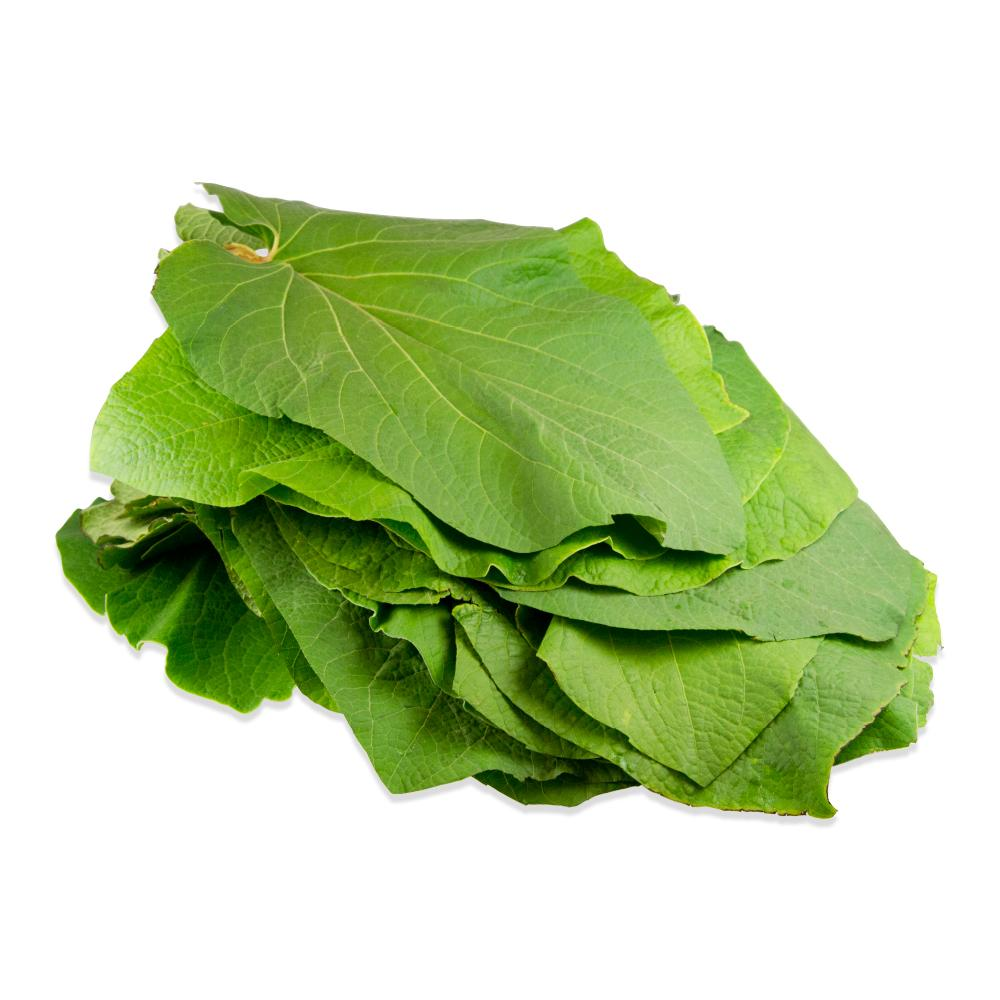 Fresh Mexican Pepperleaf For Sale Hoja Santa Marx Foods