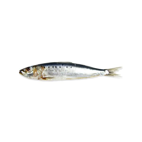 Whole Sardines