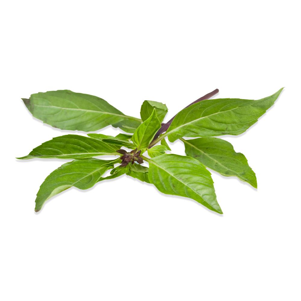 Fresh Thai Basil