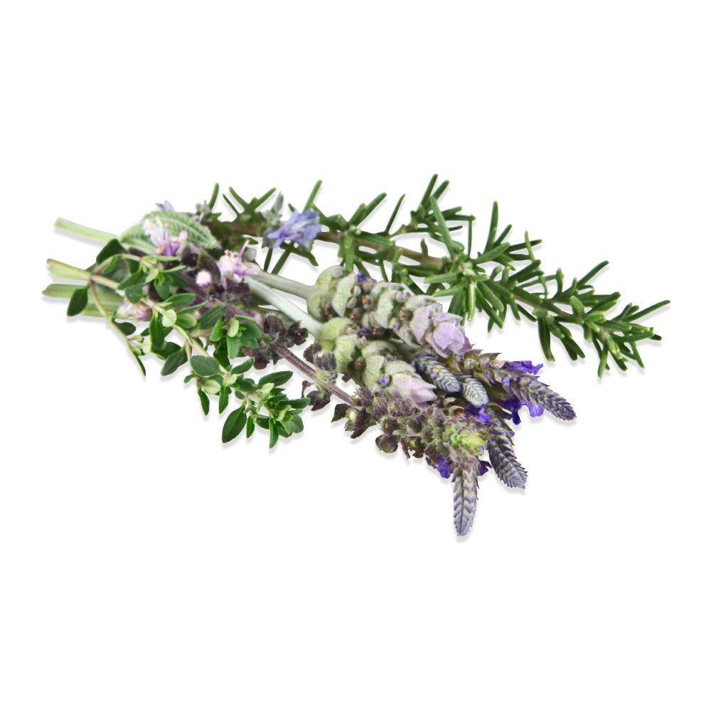 Fresh Herb Blossoms