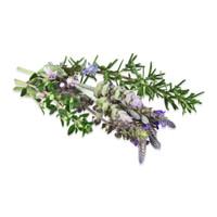 Fresh Herb Blossoms