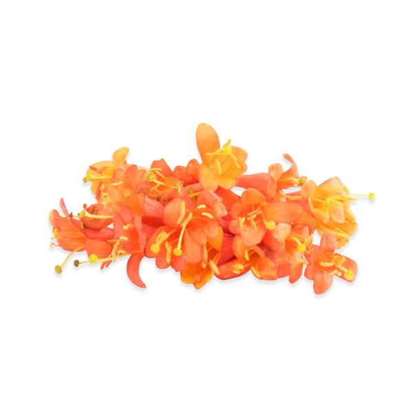 Fresh Micro Honeysuckle Flowers-1