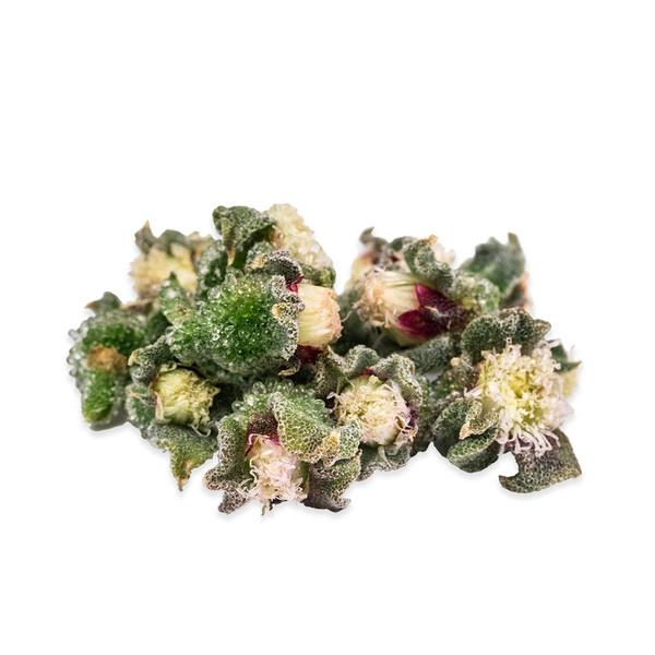 Fresh Ice Buds-1
