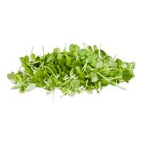 Micro Italian Basil
