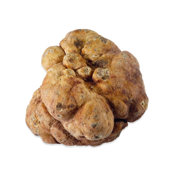 White Bianchetti Truffles