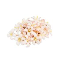 Fresh Jasmine Flowers-1