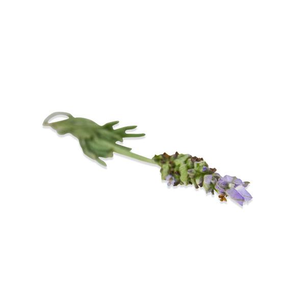 Fresh Lavender Blossoms