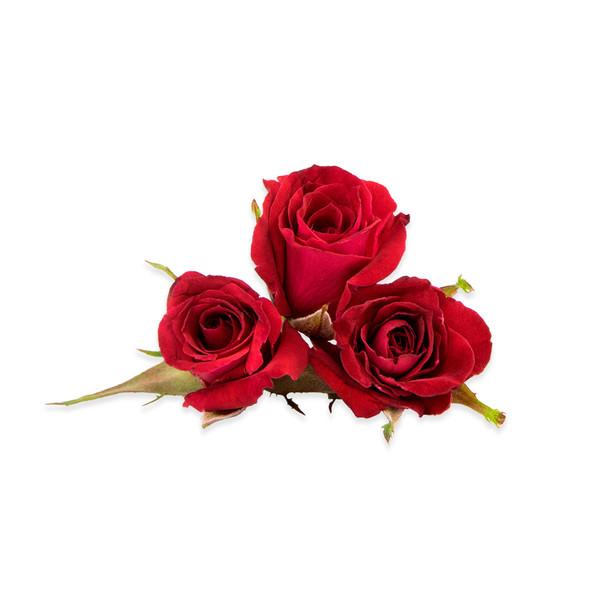 Rose Little Red Corvette™-1