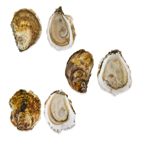 Atlantic Oyster Sampler