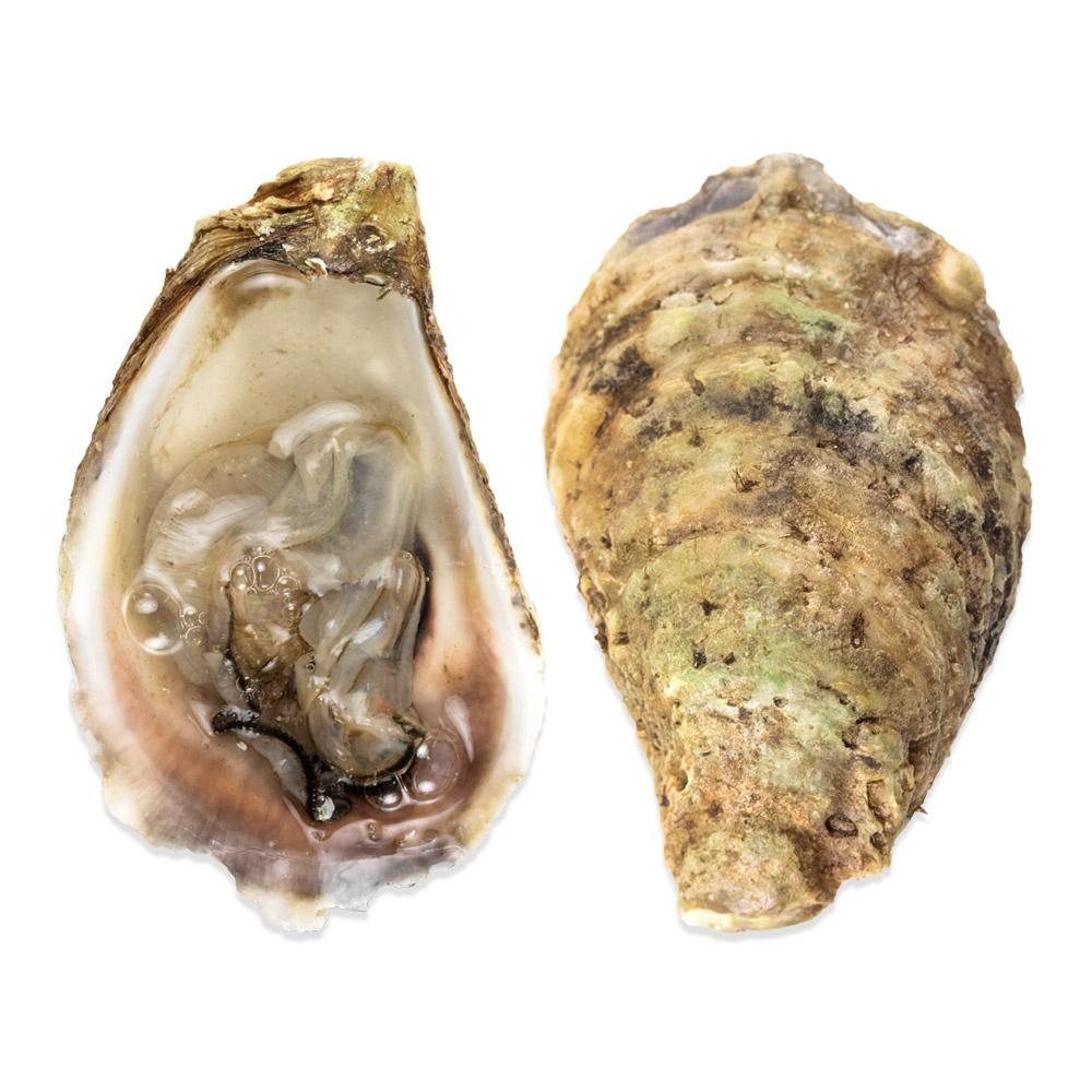 Carraquette Oysters