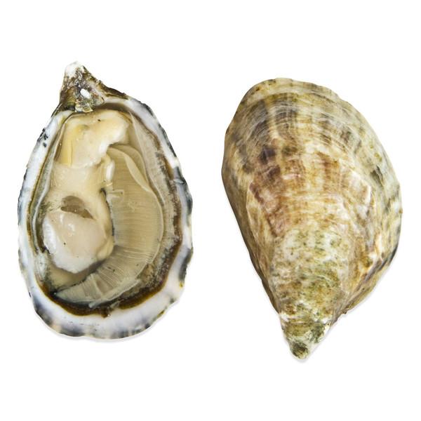 A raw live Shigoku oyster on a half shell next to a whole Shigoku oyster shell