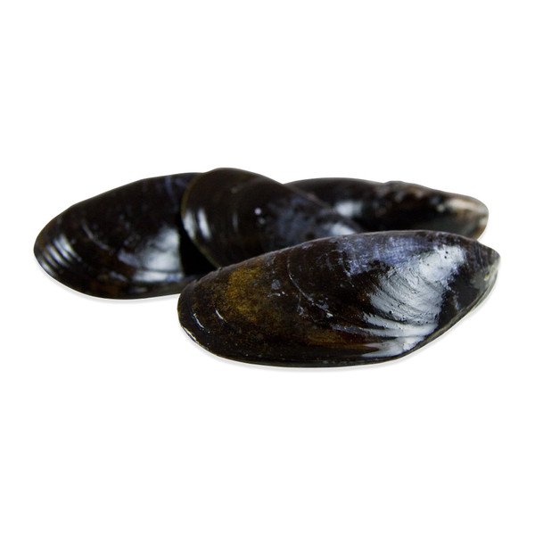 Live Maine Mussels