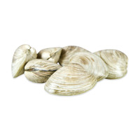 Small Quahog Clams