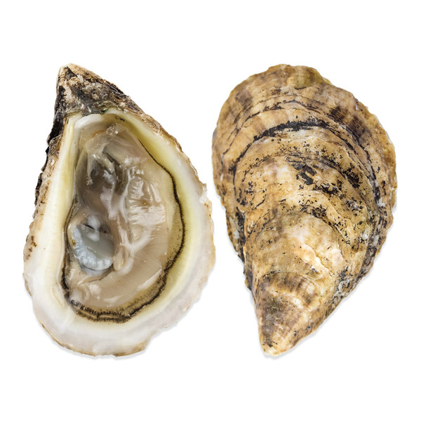 Buy Live Raspberry Point Oysters Prince Edward Island