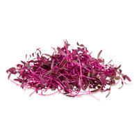 Micro Red Amaranth-1