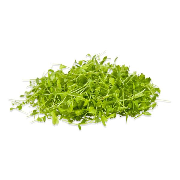 Micro Celery