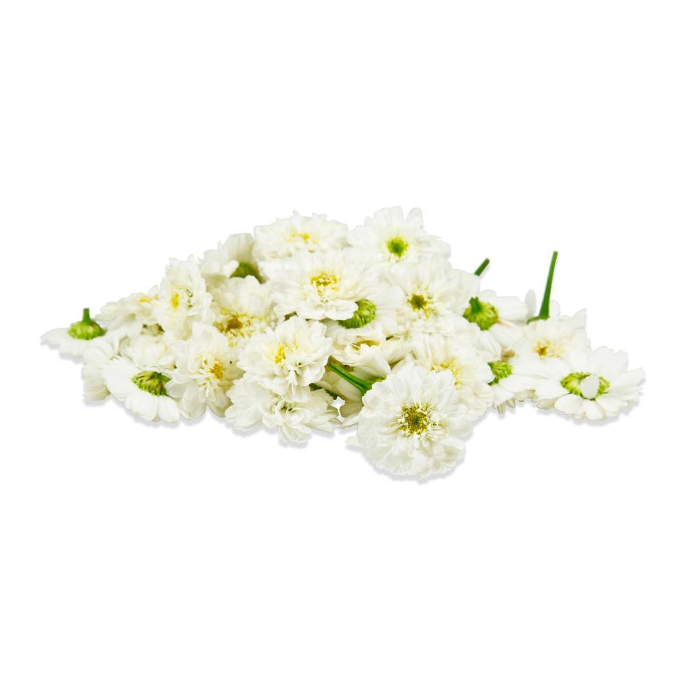 Micro Mums Flowers Micro Chrysanthemums Marx Foods