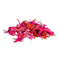 Fresh Micro Fuchsias-1