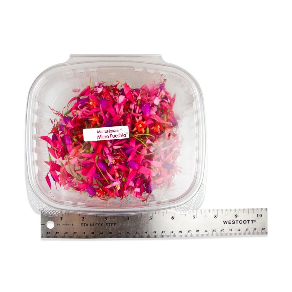 Fresh Micro Fuchsias-2