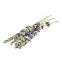 Fresh Micro Lavender Flowers-1