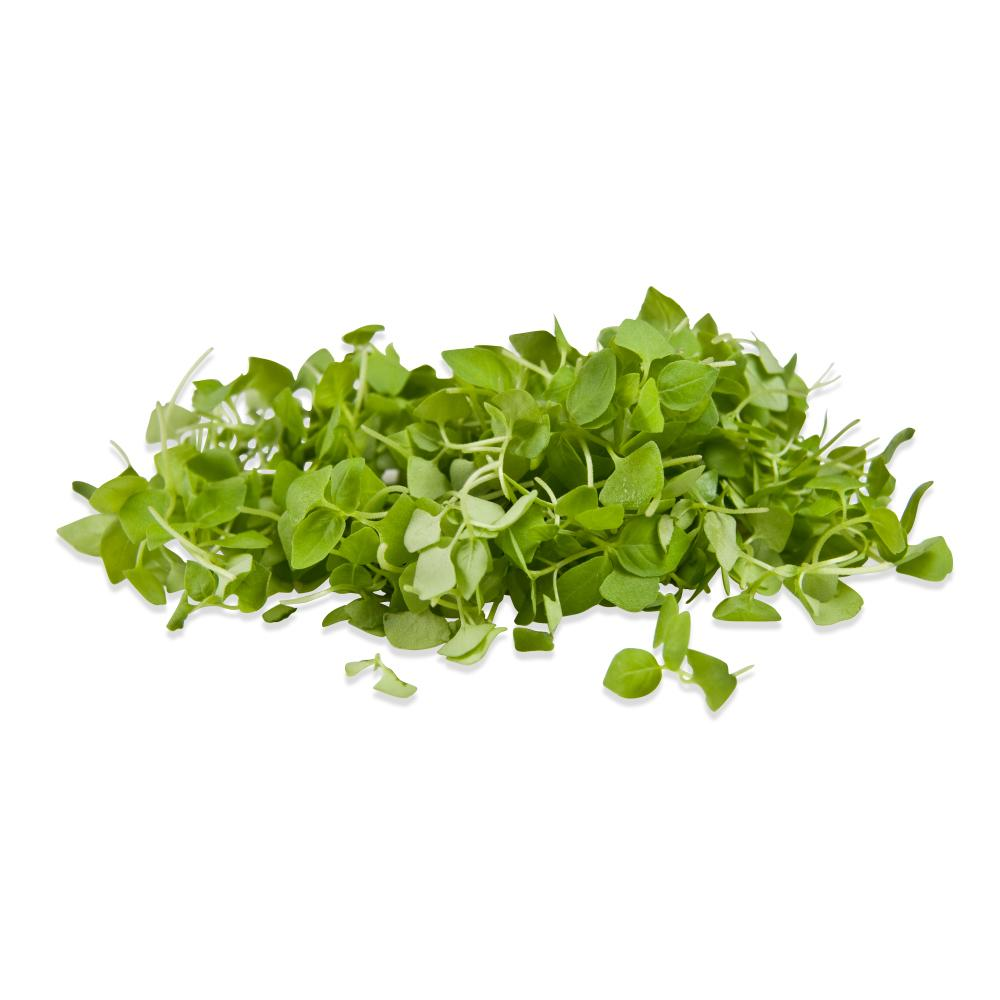 Micro Lemon Basil